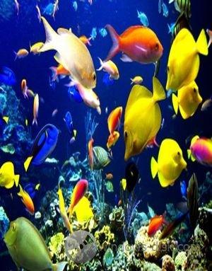 скачать живой аквариум на рабочий стол бесплатно - фото 11